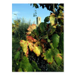 Grapevine, Tuscany, Italy Postcards
