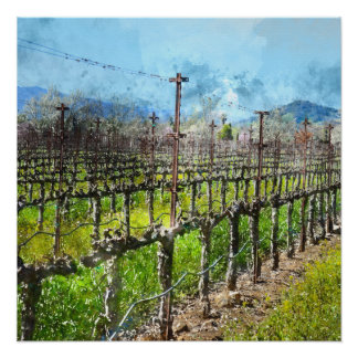 Grapevines in a Row in Napa Valley California Perfect Poster