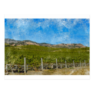 Grapevines in Napa Valley California Postcard