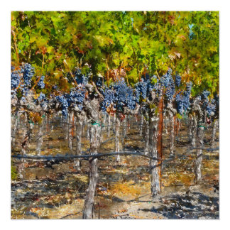 Grapevines in Napa Valley California Poster