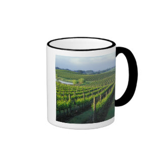 Grapevines in neat rows in California's Napa Mugs
