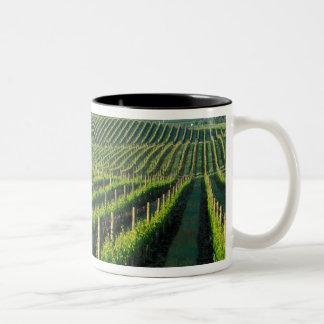 Grapevines in neat rows in California's Napa Two-Tone Coffee Mug
