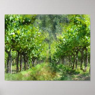 Grapevines in Spring in Napa Valley California Poster
