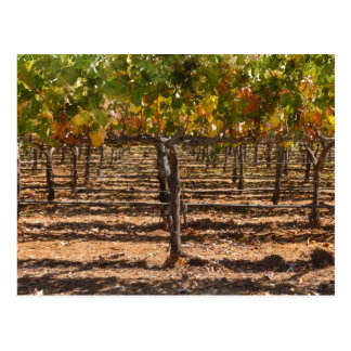 Grapevines in the Fall Postcard