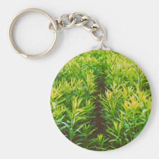 grass basic round button keychain