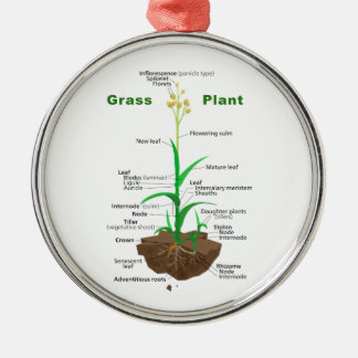 Grass Graminoids Plant Diagram Metal Ornament