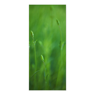 Grass - Green Grasses Background Template