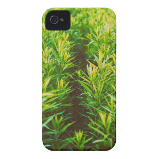 grass iPhone 4 cover