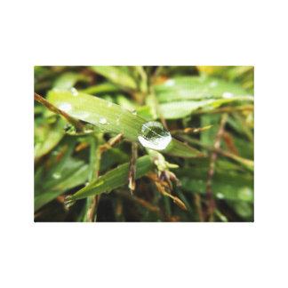 Grass with Water Drop Canvas Print