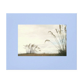 Grasses Canvas Print