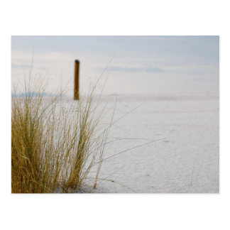 Grasses of the White Sands - Postcard