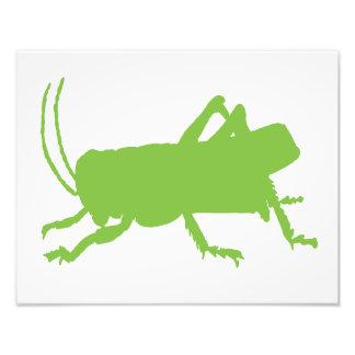 grasshopper art photo