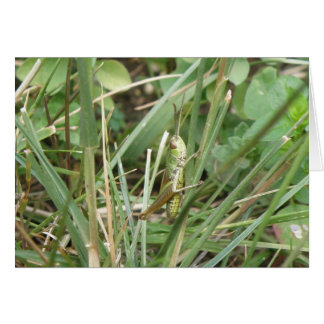 Grasshopper Camouflage Greeting Card