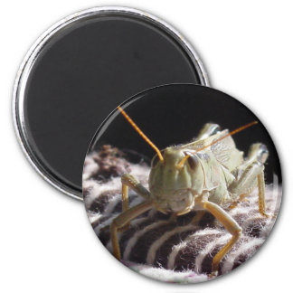Grasshopper Magnet