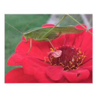 Grasshopper on Flower Photo Print