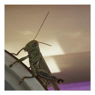 Grasshopper Perfect Poster