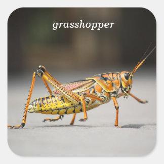 grasshopper square sticker