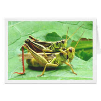 Grasshoppers on Zucchini Card