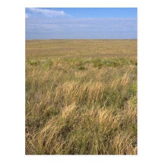 Grassland prairie east of Sidney, Nebraska. Postcard