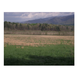 Grasslands in Cades Cove, Smoky Mountains Postcard