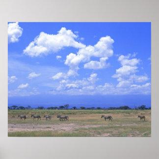 Grassy Plain Poster
