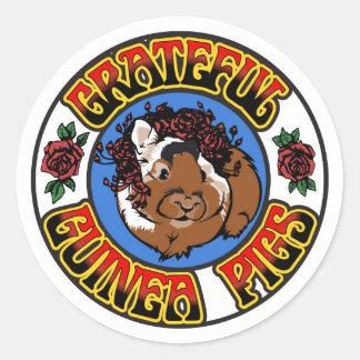 Grateful Guinea Pig Classic Round Sticker
