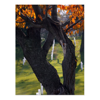 Graves through the Trees Postcard