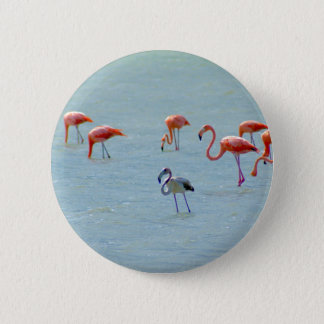 Gray and pink flamingos flock in lake 2 inch round button