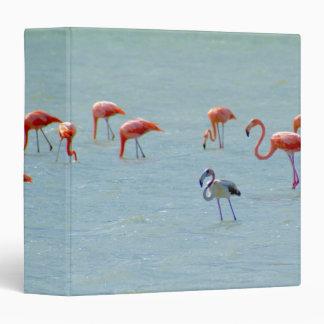 Gray and pink flamingos flock in lake binder