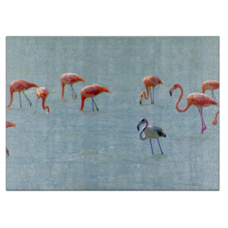 Gray and pink flamingos flock in lake boards
