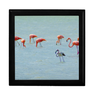 Gray and pink flamingos flock in lake gift box
