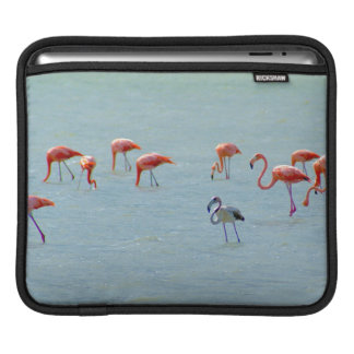 Gray and pink flamingos flock in lake iPad sleeve