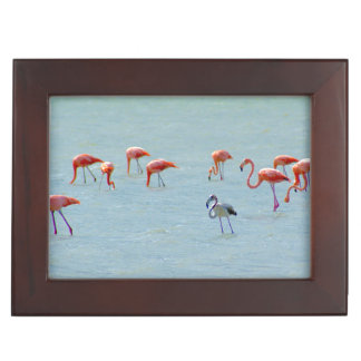 Gray and pink flamingos flock in lake keepsake box