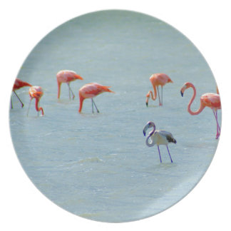 Gray and pink flamingos flock in lake plate