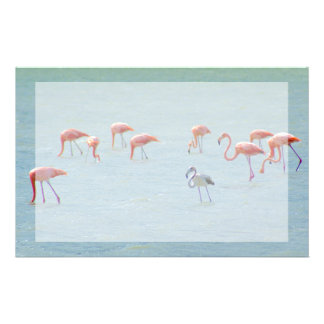 Gray and pink flamingos flock in lake stationery
