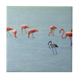 Gray and pink flamingos flock in lake tile