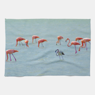 Gray and pink flamingos flock in lake towels