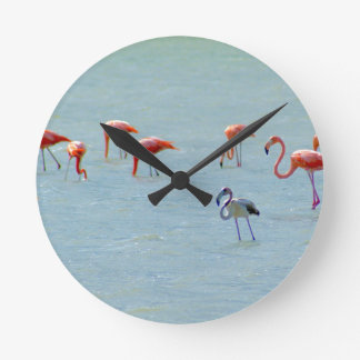 Gray and pink flamingos flock in lake wallclocks
