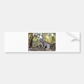Gray and White Koala Bear Bumper Sticker