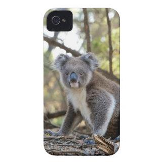 Gray and White Koala Bear Case-Mate iPhone 4 Case
