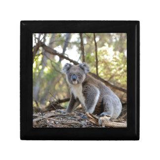 Gray and White Koala Bear Gift Box