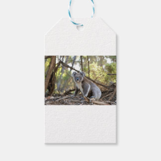 Gray and White Koala Bear Gift Tags