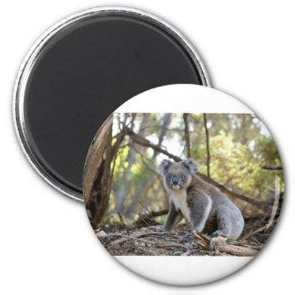 Gray and White Koala Bear Magnet