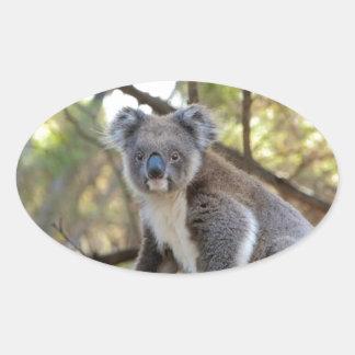 Gray and White Koala Bear Oval Sticker