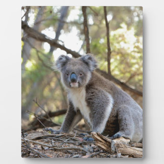 Gray and White Koala Bear Plaque