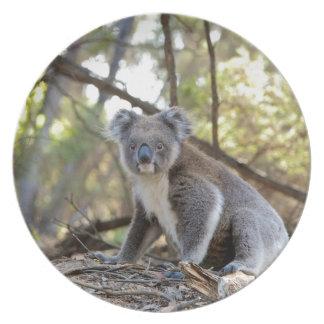 Gray and White Koala Bear Plate