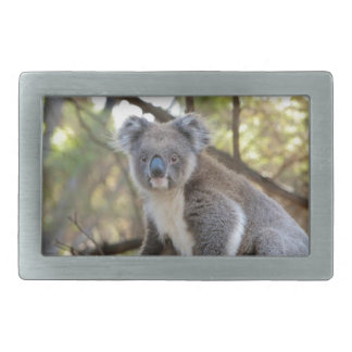 Gray and White Koala Bear Rectangular Belt Buckles