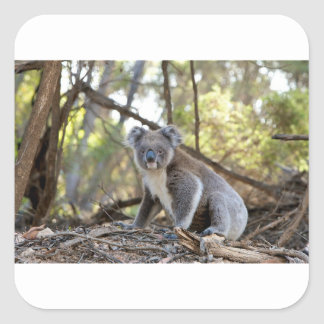 Gray and White Koala Bear Square Sticker