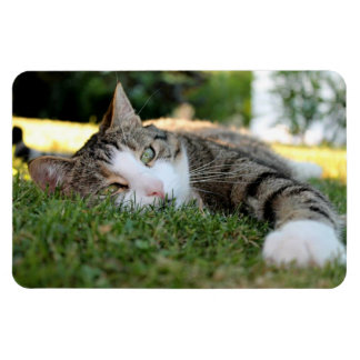 Gray and White Tiger Cat Daydreams on Grass Magnet