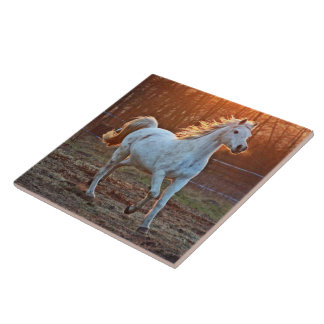 Gray Arabian Horse Tile